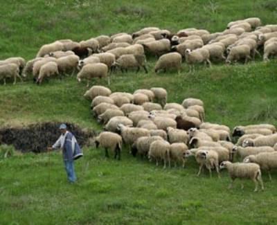 Προβληματισμός αγροτοκτηνοτροφικών συλλόγων Ελασσόνας για τις κρατικές ενισχύσεις