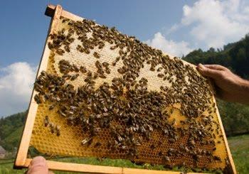 Γενική Συνέλευση Μελισσοκόμων Ελασσόνας την Κυριακή
