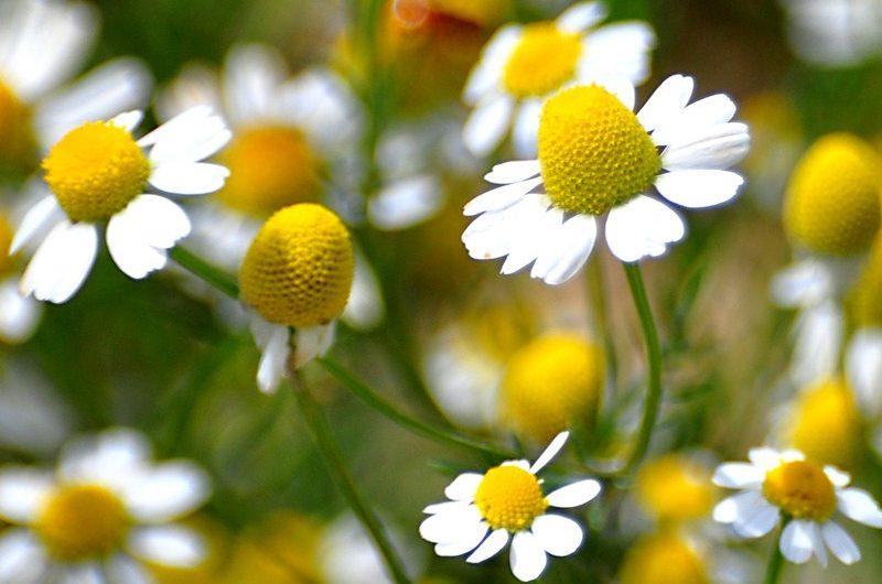 Σεμινάριο για αρωματικά φυτά από το ΚΠΕ Κισσάβου – Ελασσόνας
