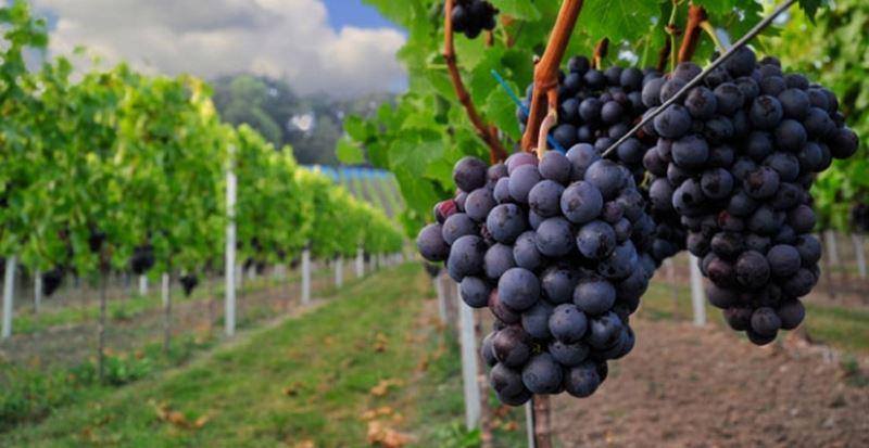 Ανακοινώσεις της Περιφέρειας Θεσσαλίας για αγρότες και συγκέντρωση ανθρωπιστικής βοήθειας