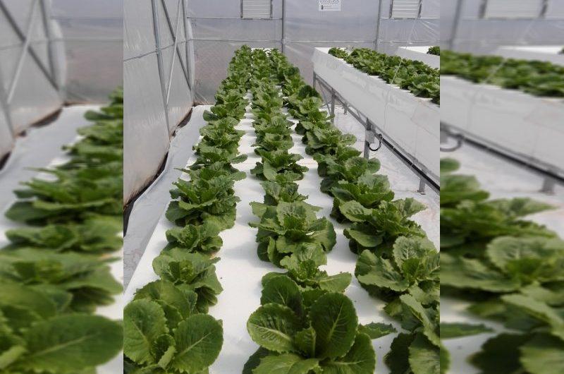 Δωρεάν σεμινάριο για παραγωγή λαχανικών στη Λάρισα – Αιτήσεις συμμετοχής