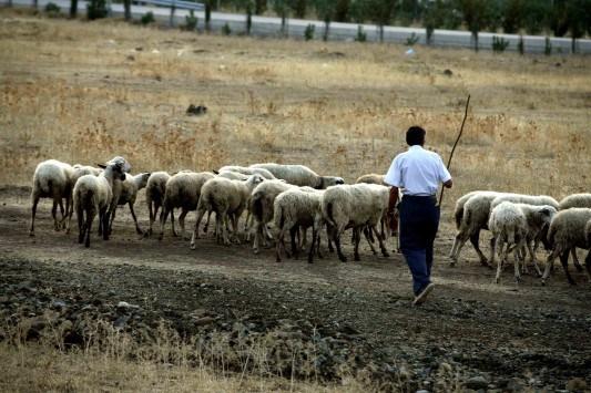 Παραλαβή αιτήσεων ΦΠΑ αγροτών