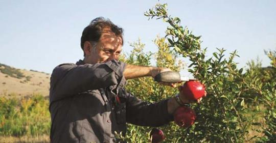 Στέφανος Πούτας: Ελασσονίτικα ρόδια και μαρμελάδα από ρόδι στις αγορές της Ευρώπης